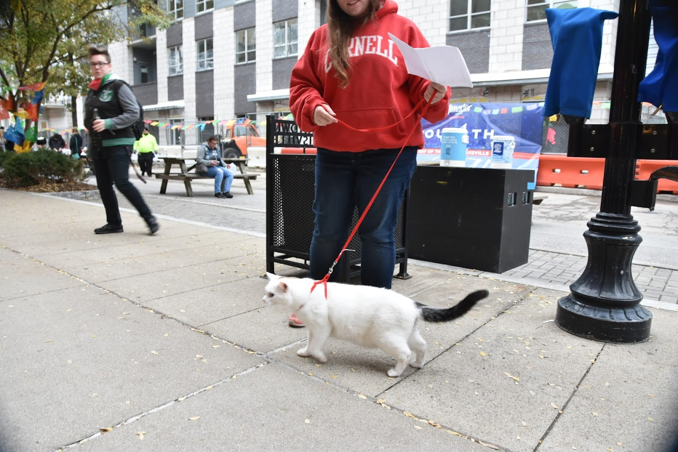 a cat being walked like a dog